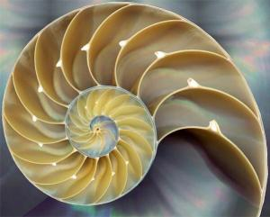 cut shell growth spiral