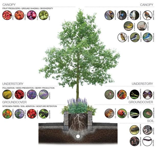 planter, ecology, DCP, design