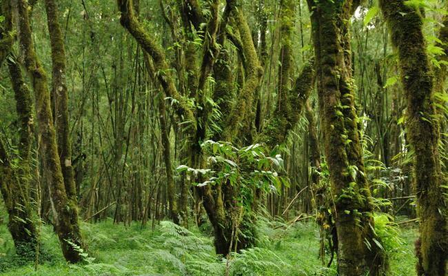 Sheka Forest (Photo: Will Baxter)