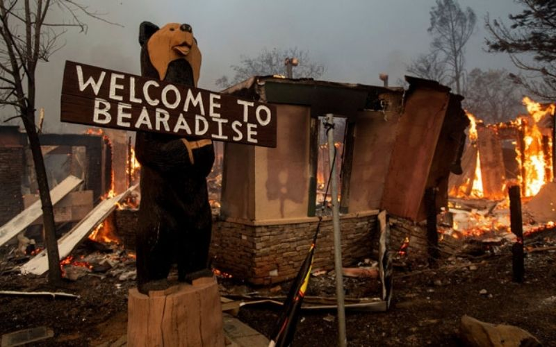 Incendio en Bear Forest