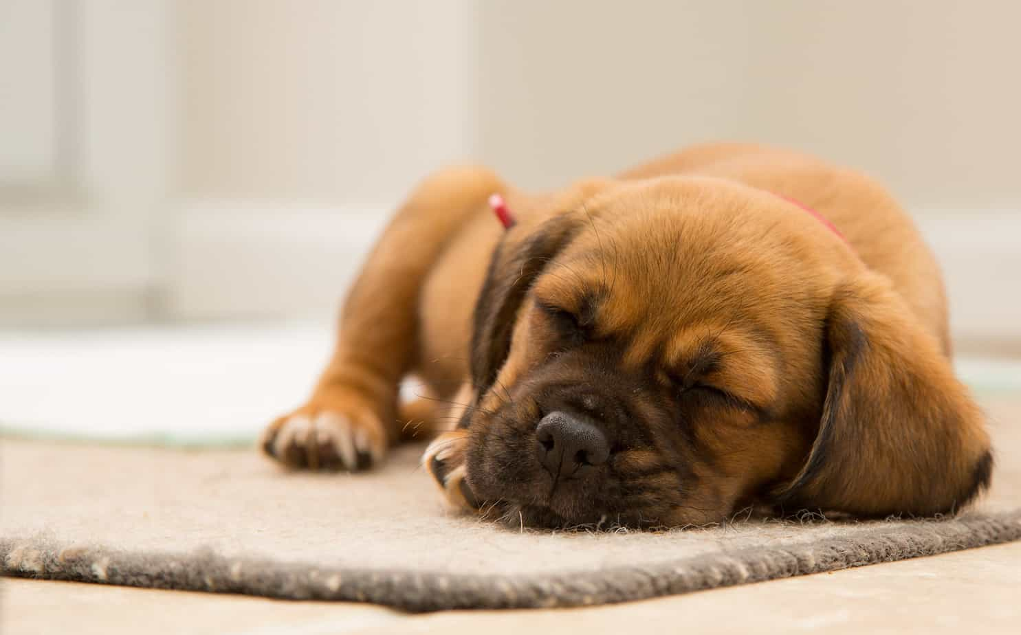 10 of the Best Poems about Dogs – Interesting Literature