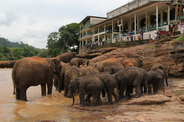 Pinnawala Elephant Orphanage sri lanka tourism