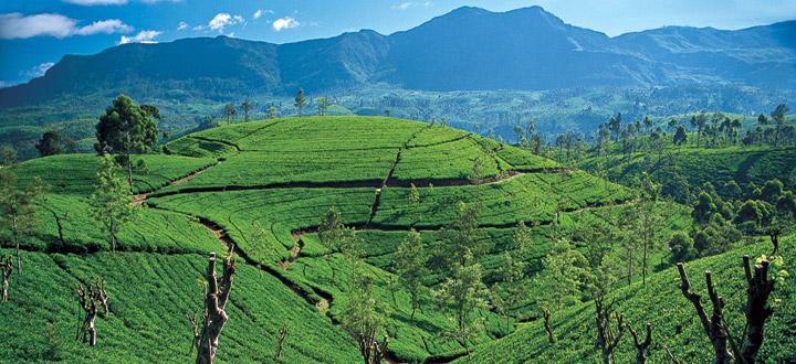Nuwara Eliya Sri Lanka tourism
