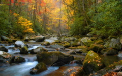 Fall in Tennessee wallpaper