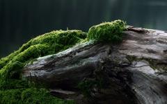 High-resolution desktop wallpaper Moss by tommyhev