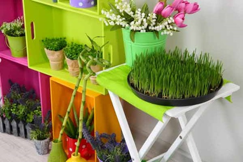 Diy Indoor Herb Garden Small Spaces Kitchens