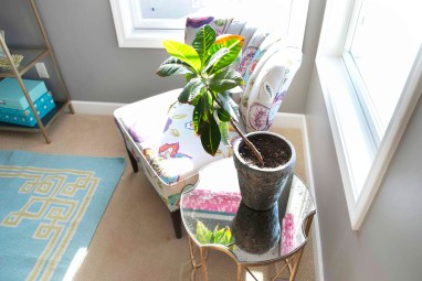A colorful Chair and Tropical Plant Set a warm climate