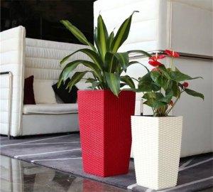 plants26