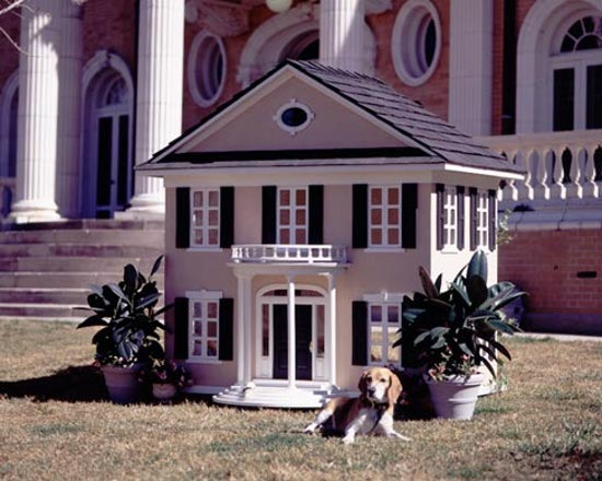 Beagle with Luxury Dog House