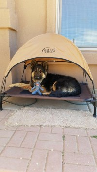 27 DIY Pet Bed Ideas For Your Inspiration - InteriorSherpa