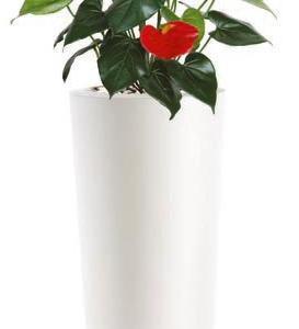 Anthurium - plante artificiale, plante lux