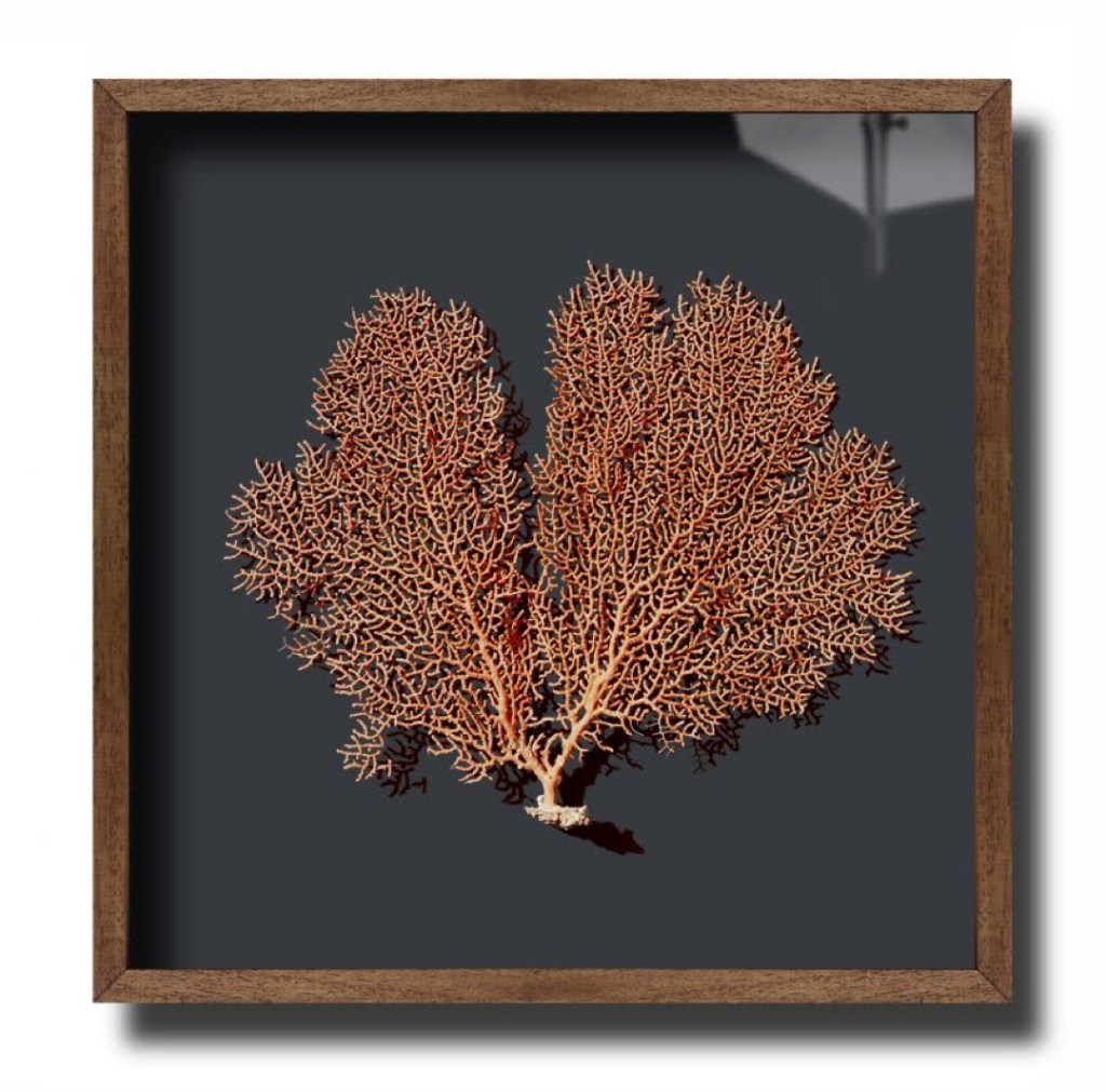 hannah brown interiors coral framed