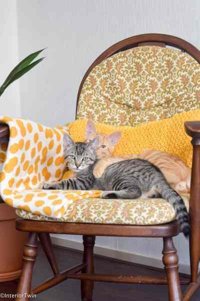 kittens in een gele stoel