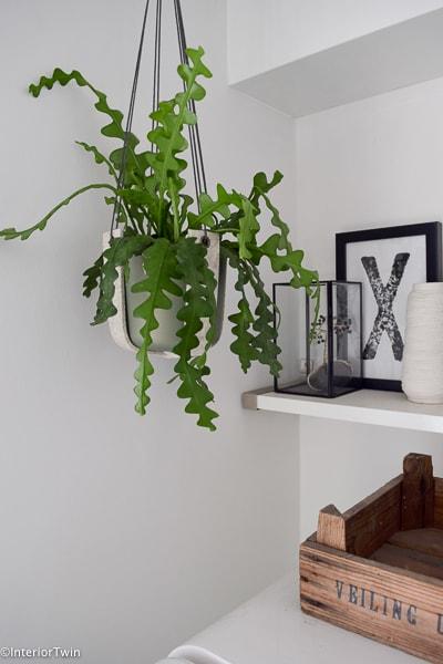 Sterke Hangplanten Voor Binnen.De 10 Leukste Hangplanten Voor Binnen Interiortwin