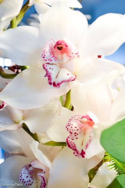 wit met paarse bloem