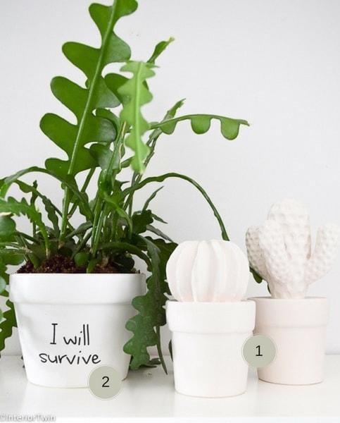 plantenpot en cactus blokker