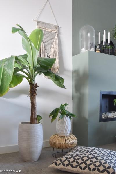 bananenplant stekken instructie