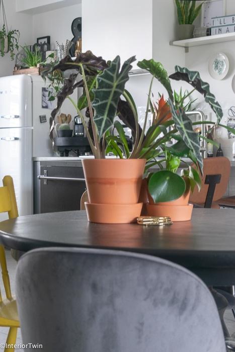 planten in terracotta potten op zwarte eettafel