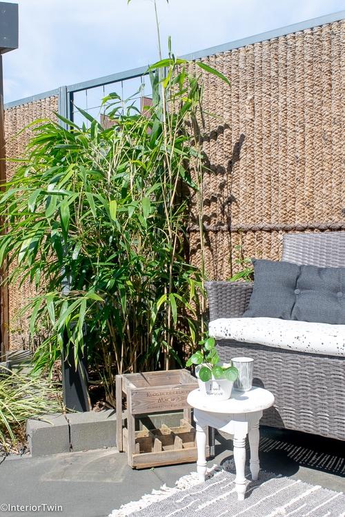 bamboe in tuin