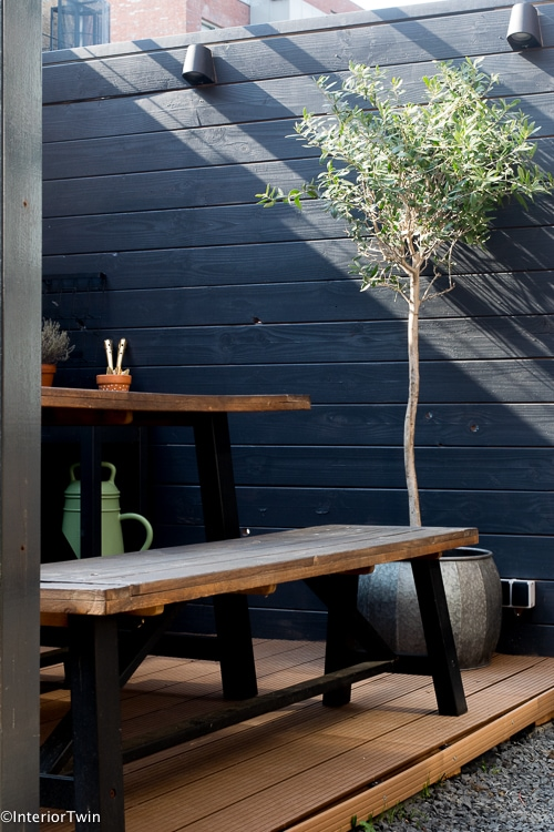 olijfboom in pot in kleine tuin