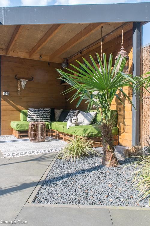palmboom in kleine tuin