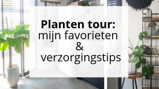 Planten tour_ mijn favorieten + verzorgingstips