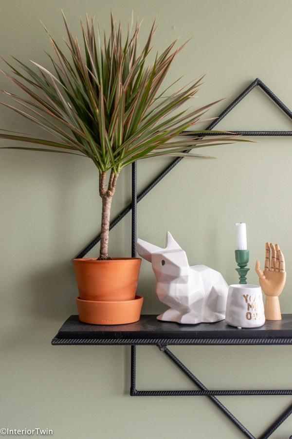 groene kneusjes pakket plant terracotta pot