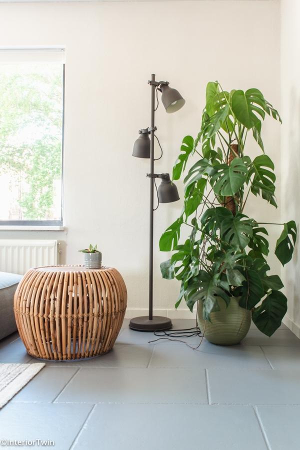 grote monstrera plant woonkamer