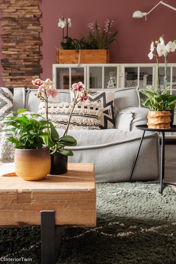 orchidee bloeiende kamerplant