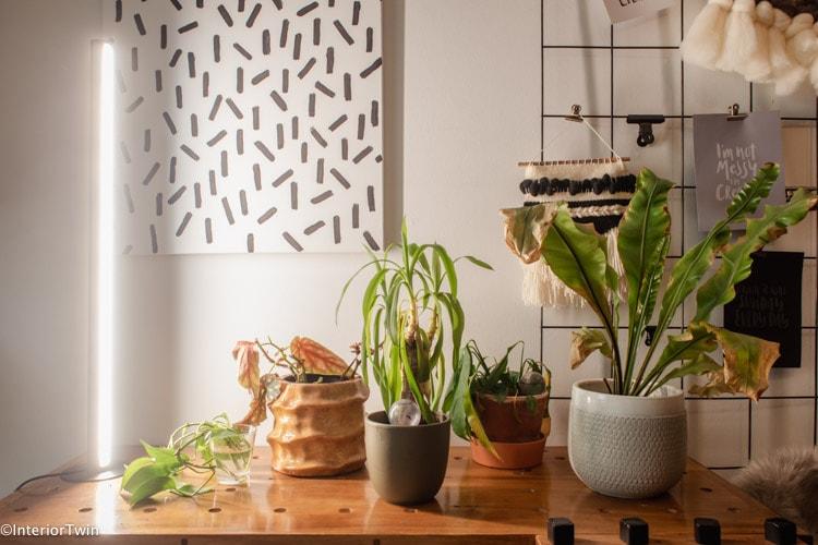 plantenlamp kamerplanten uitkiezen