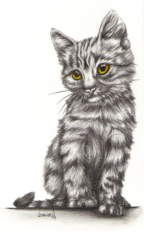 kitten drawing pencil by keena wolff las cruces cat