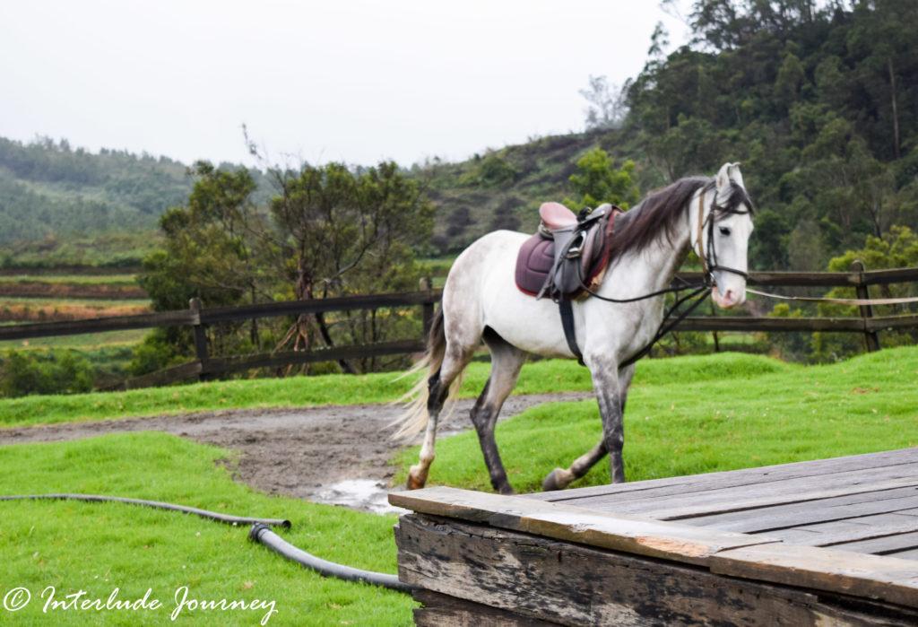 Horse Riding at Destiny Farm