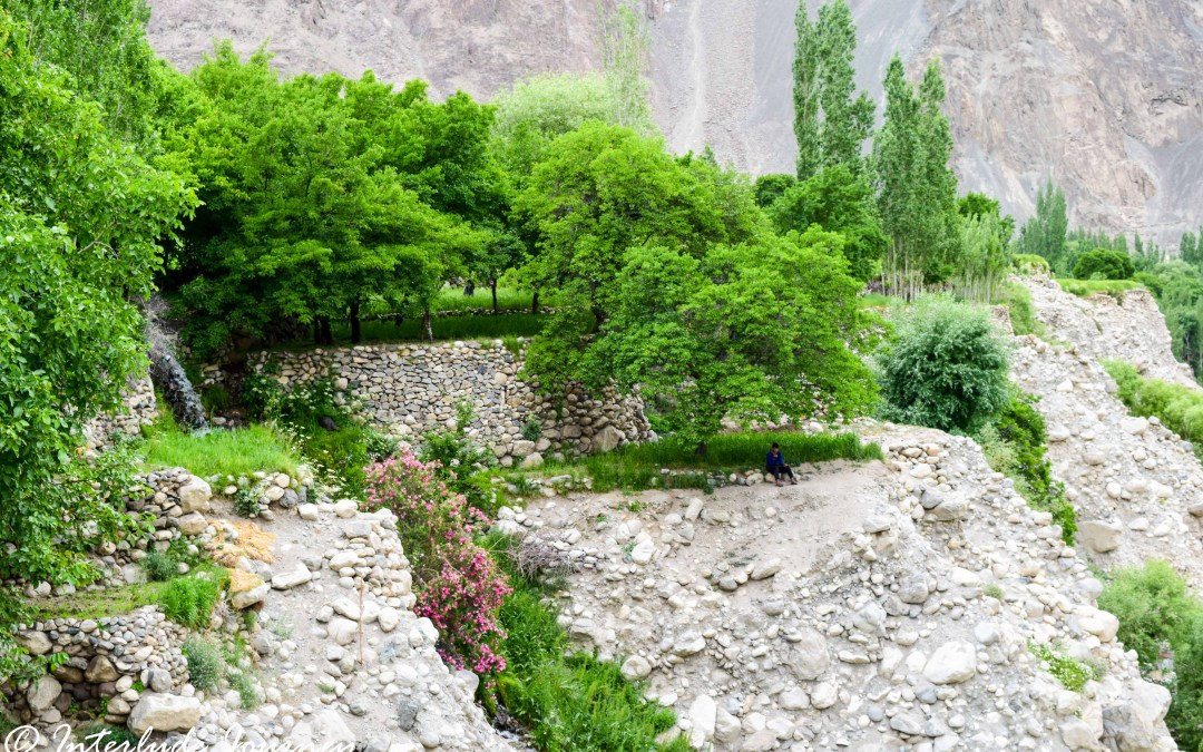 Vignettes From Nubra- The Valley of Wild Roses