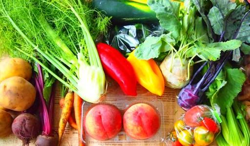 なぜ野菜の価格は乱高下するのか?子どもと一緒に考えてみよう。