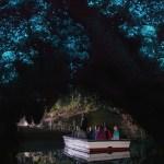 Inside the Waitomo caves