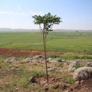 trees03