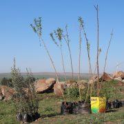 trees17