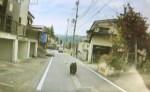 Osos atacan a 4 personas en 3 prefecturas de Japón