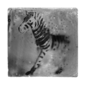 Wilson Zebra low res