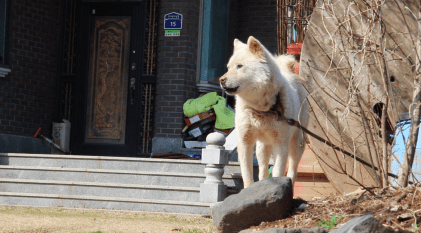A dog in Choi's neighborhood.