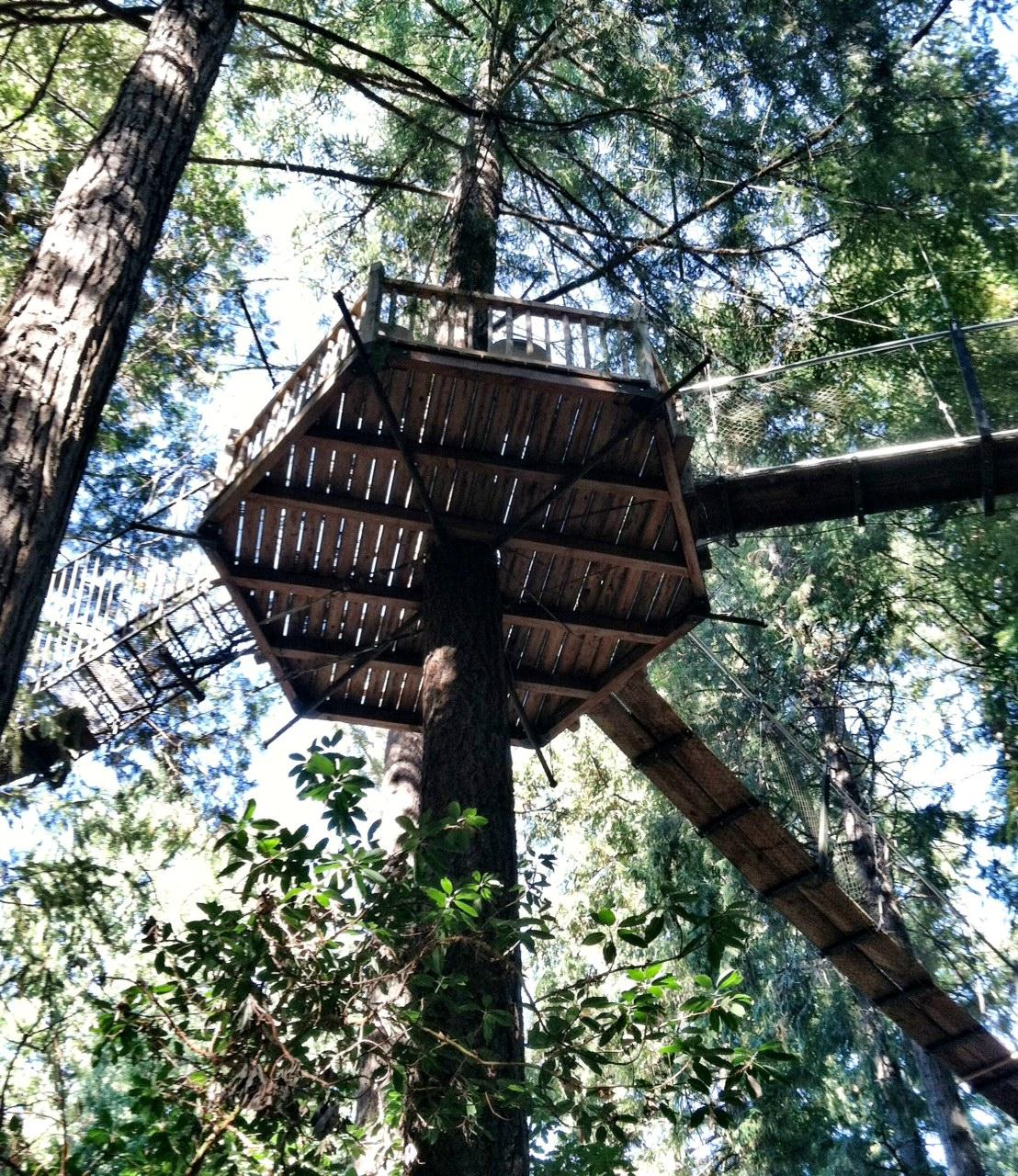 Tree House Bridge Platform