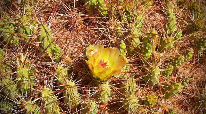 Decomiso de cactus chilenos en Italia