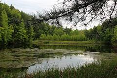 Allen Branch Pond