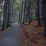 Black Balsam Spruce Forest