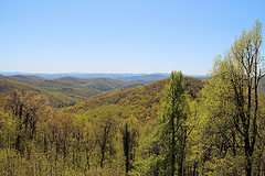 Beaverdam Gap Overlook