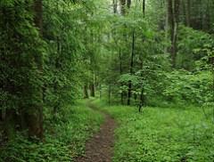 Chestnut Branch Trail