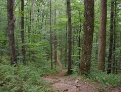 Coontree Loop Trail