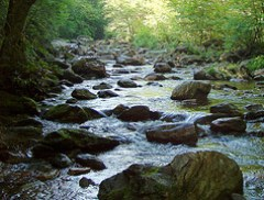 East Fork of the Pigeon River