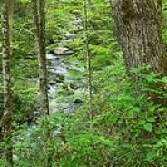 Palmer Creek