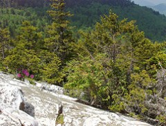 Shining Rock Pinnacle